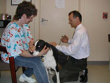 Chiropractor Renton WA Randy Baze Animal Chiropractic