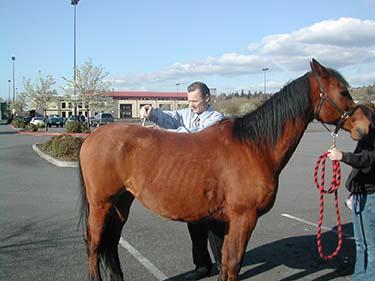 Chiropractor Renton WA Randy Baze Horse Adjustment
